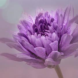 Purple Dahlia by Sandi Kroll