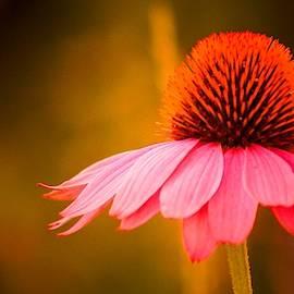 Purple Flower Pano by Daniel Thompson