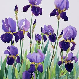 Purple Irises by Christopher Ryland