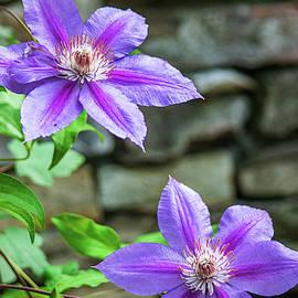 Purple Perfection by Mary Ann Artz