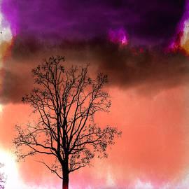 Purple Sandwich by Jim Love