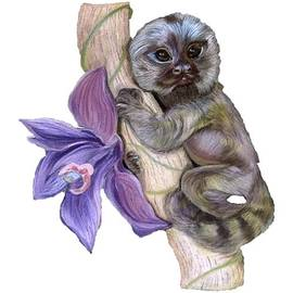 Pygmy Marmoset by Maria Sibireva