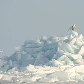 Queen of her ice castle by Heather King