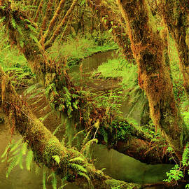 Quinault Rain Forest by Leland D Howard