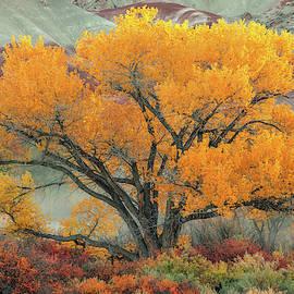 Radiant  by Dustin LeFevre