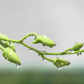Rain Dancer by Robin Zygelman