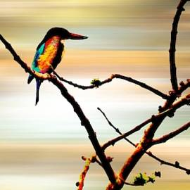 Nilu Mishra - Rainbow bird