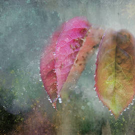Raindrops on Rose Leaves by Terry Davis