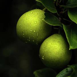 Rainy Day Apples by Jackie Follett
