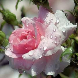 Rainy Roses by Deb McPherson