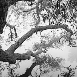 Ramona Grasslands Branches Over Water by William Dunigan