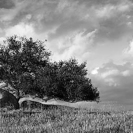 Ramona Grasslands Tree Panorama by William Dunigan
