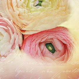 Ranunculus and Letter by Terry Davis