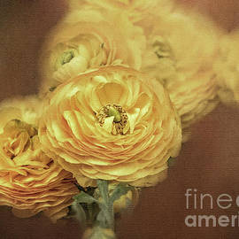Ranunculus Flower by Flo Photography