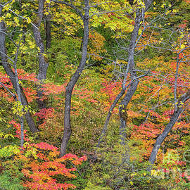 Red and Gold by Mike Dawson