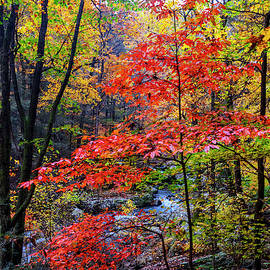 Red and Gold of Autumn by Debra and Dave Vanderlaan