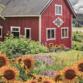 Red Barn In Summer Country Sunflowers by Debra and Dave Vanderlaan