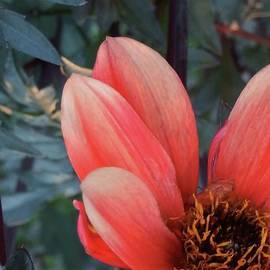Red Beauty by Marcia Lee Jones
