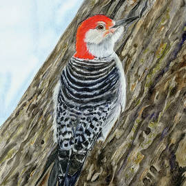 Red-bellied Woodpecker by Vicky Lilla