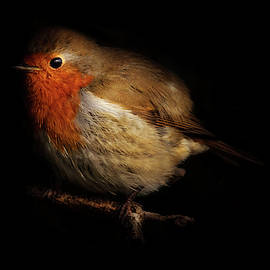 Red Breast by Richard Sayer