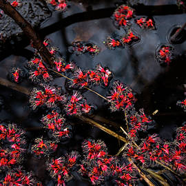 Red Buds by Neal Nealis