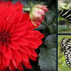 Red Dahlia and Butterflies - A Collage by Dora Sofia Caputo
