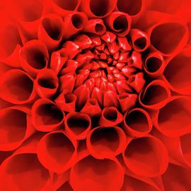Red Dahlia Macro by Don Johnson