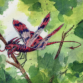 Red Dragonfly by Sam Sidders