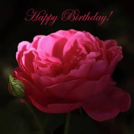 Red Evening Rose Happy Birthday by Johanna Hurmerinta