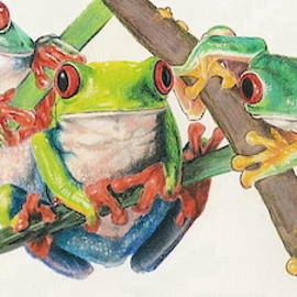 Barbara Keith - Red-Eyed Tree Frog Bunch