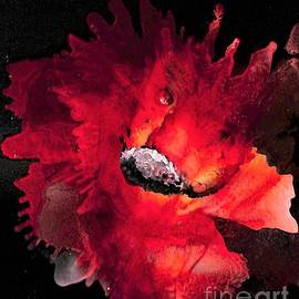 Red Flower Abstract by Patty Donoghue