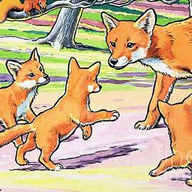 Harry M Pettit - Red Fox and her cubs