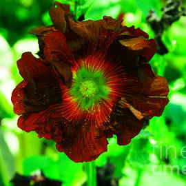 Red hollyhock by Jeff Swan
