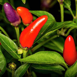 Red Hot Chili Peppers by David Morefield