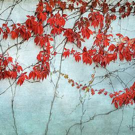 Red Ivy  by Mary Lee Dereske