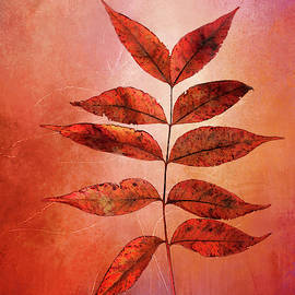 Red Leaves on Texture by Terry Davis