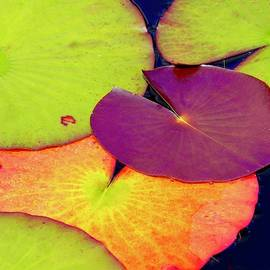 Red Lily Pad by Alida M Haslett