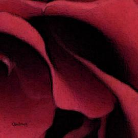 Red Rose by Carel Schmidlkofer