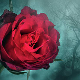 Red Rose by Carol Japp