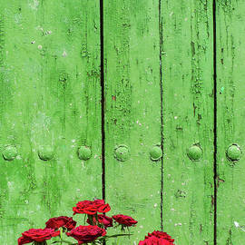 Red roses Green door by Digby Merry