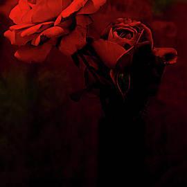 Red Roses In Vase. by Alexander Vinogradov