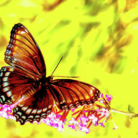 Red Spotted Admiral On Butterfly Bush by Jeff Folger