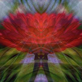 Red Zinnia Abstract by Marilyn DeBlock