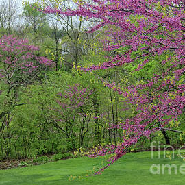 Redbud Beauty by Karen Adams