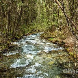 Redstreak Creek by Robert Bales