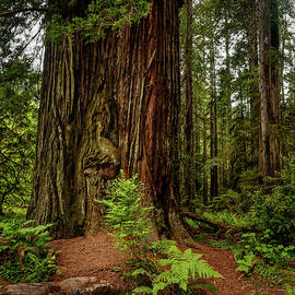 Redwood Forest 12 by Mike Penney