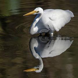 Bruce Frye - Reflected Great Egret