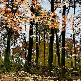 Reflecting On Autumn by John Meader