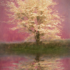 Reflecting on Spring White in Pink by Debra and Dave Vanderlaan