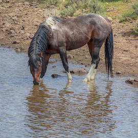 Reflecting - South Steens Mustangs 01006 by Kristina Rinell